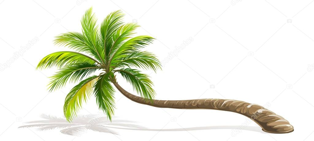 Palm Tree isolated. Vector