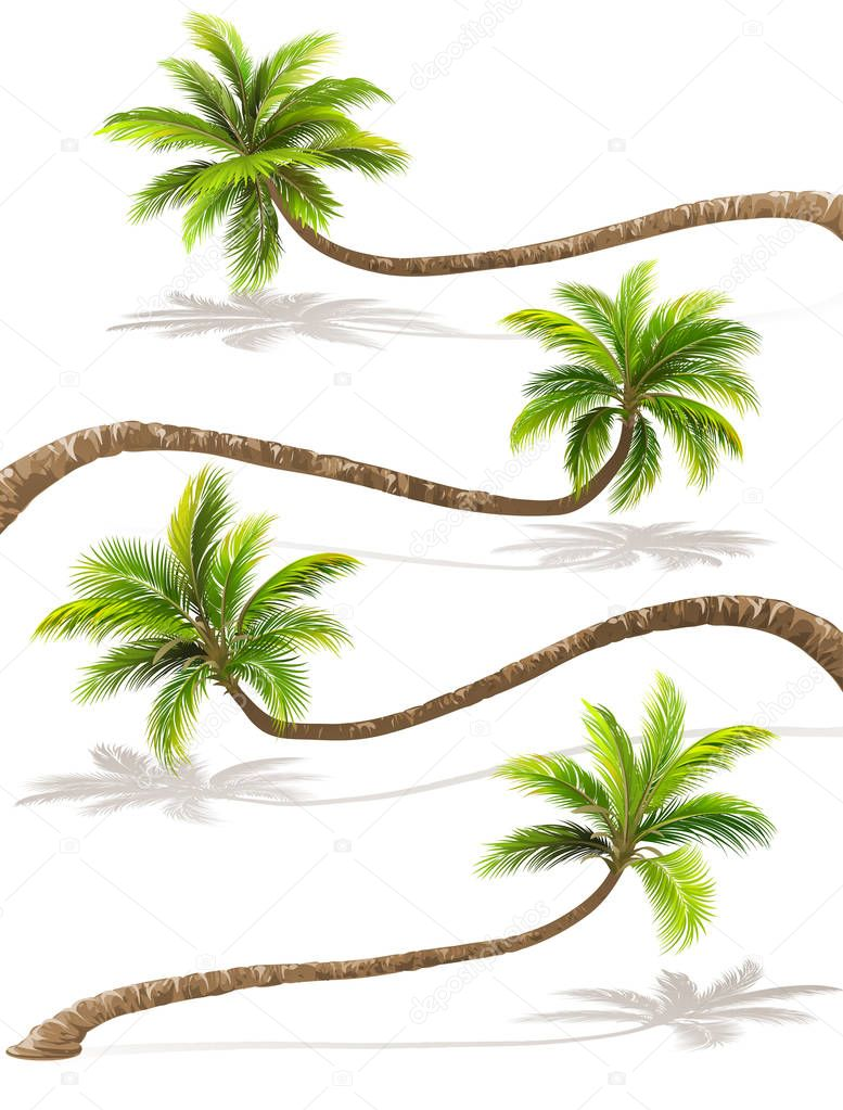 Palm trees with shadow. Vector