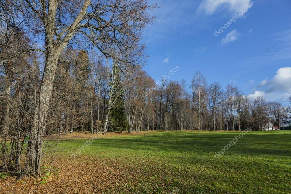 field and birch in autumn