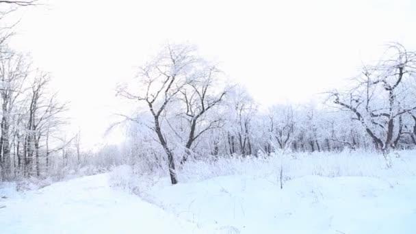 Bäume mit Schnee bedeckt