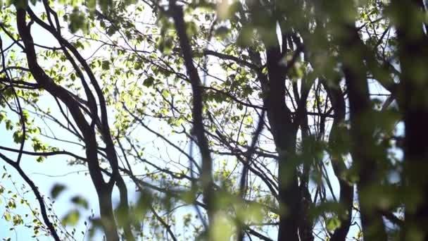 stromy s listy v lese