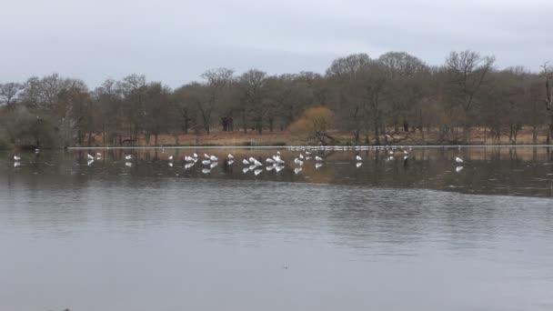 Ptáky na jezeře pokryté ledem