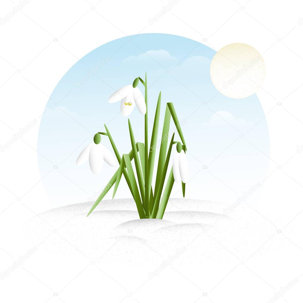 Snowdrops - minimalistic flat design illustration