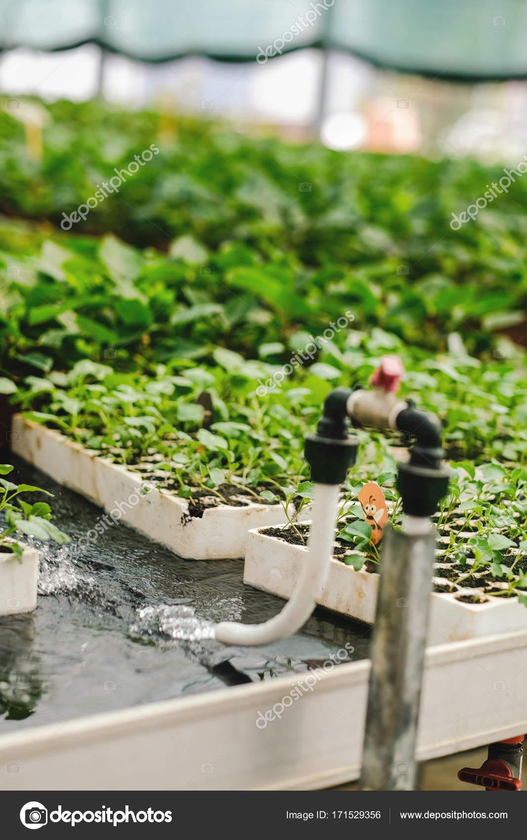 Bewasserungssystem Fur Die Pflanzen Im Kindergarten Des Grunen