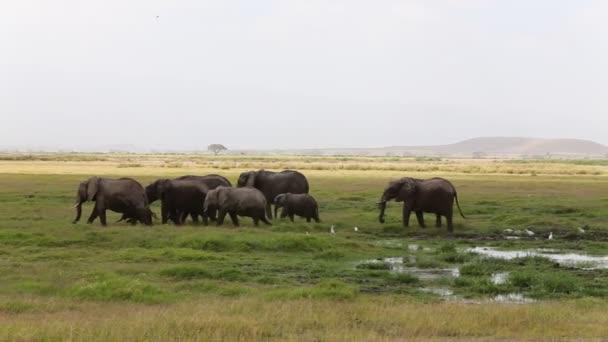 Csorda elefánt után folyó fürdő az Amboseli nemzeti Park.