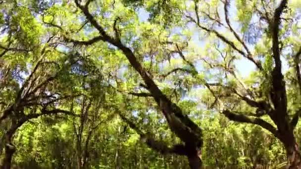 Driving inside oak road forest