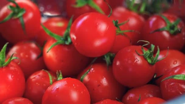 Close-Up Falling Čerstvé rajče (zelenina) V košíku s rajčaty. (Červený drak, pomalý pohyb, záběry z filmové kvality).
