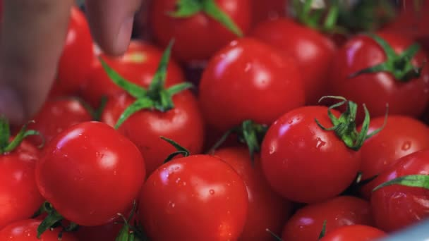 Koch nimmt mit der Hand eine Tomate aus dem Korb. Essen aus nächster Nähe. Kochprozess. Chef Cooking Dish vorhanden. Chef bereitet Essen zu. (Roter Drache, Zeitlupe, Filmqualität Makroaufnahmen).