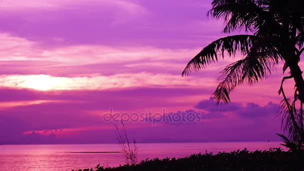 Silueta palem na purple sunset