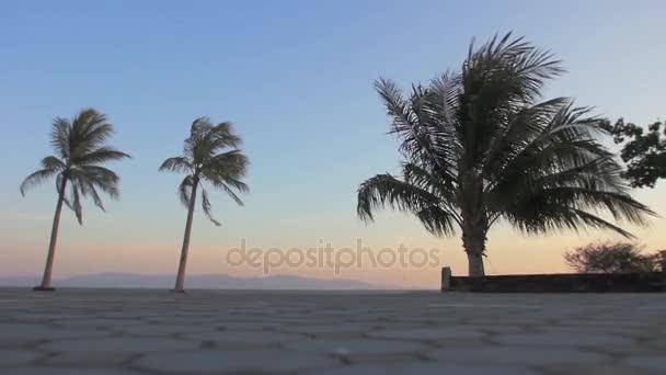 Palmy, vlající ve větru na západ slunce