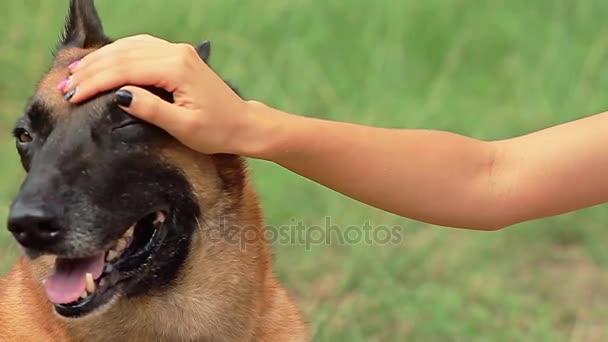 Ženská ruka hladila jeho psa