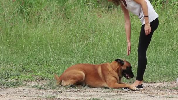Německý ovčák pes dělá příkaz