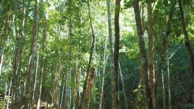 Scenic of amazing nature. 3 shots