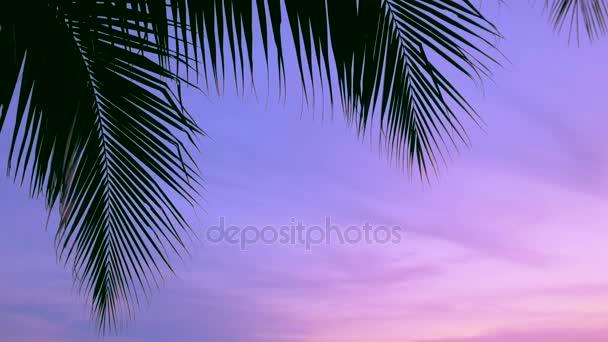 Palmy a slunce nebe, tropické západ slunce s zvuk cikád, 3 výstřely