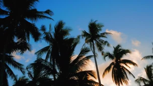 video 2 v 1. Tropické slunce nebe s palmami