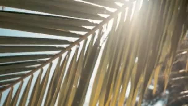 Napsütés, pálma levelek sun háttérrel, lencse fényfolt hatások révén