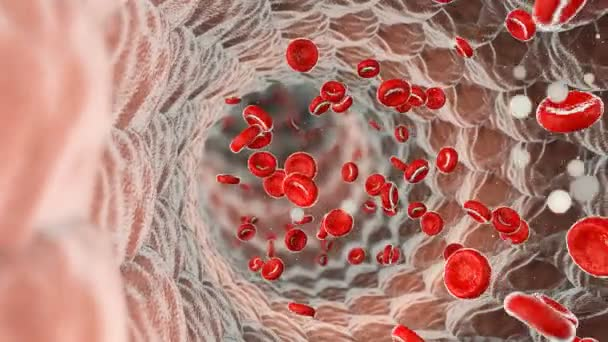 la circulation sanguine video