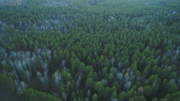 Vzdušné povahy pohled Zelený divoký Les