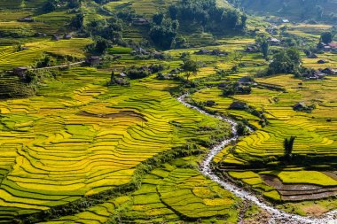 Rice fields and a river