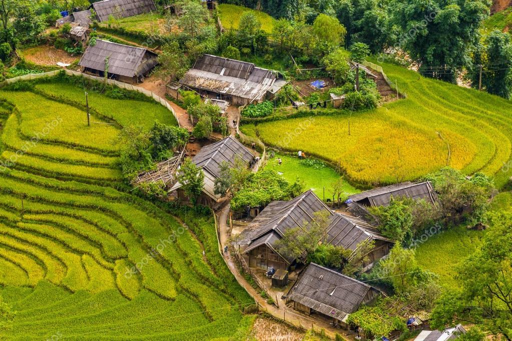 Rice fields in a village