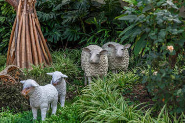 Representation of  sheep in the middle of a outdoors manger,  at