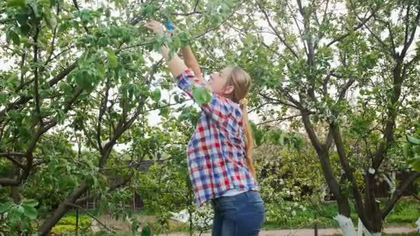 4 k záběry mladá žena prořezávání jabloní v sadech na jaro