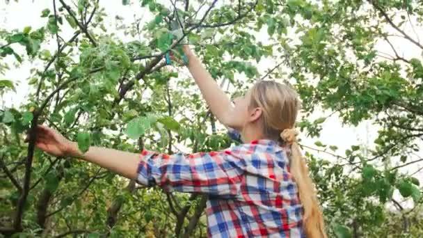 4 k záběry z prořezávání větví krásná mladá žena na vrcholu stromu v sadech