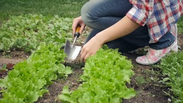 Zpomalené video mladé ženy kopání díry pro sazenice na zahradu