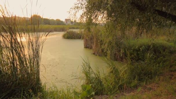 Krásný rybník zarostlý s reed. Slunce se odráží ve vodní hladině. Klidné scény