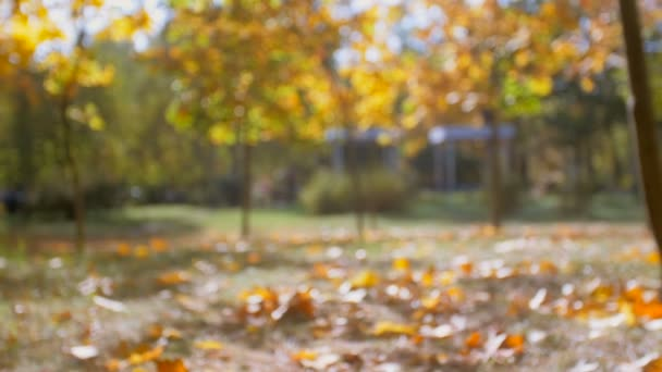 Slow motion footage of yellow autumn leaves falling at bright sunny day