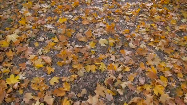 Steadicam slow motion footage of camera flying above parkway covered with fallen autumn leaves