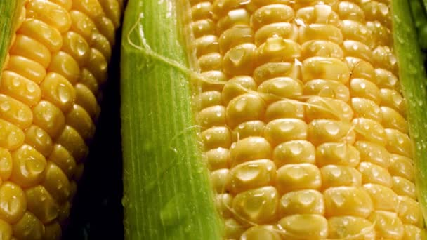 Closeup 4k footage of fresh raw yellow corn cobs with dew droplets lying in heap. Concept of healthy nutrition and organic food. Perfect shot for vegetarian or vegan. Farming industry background