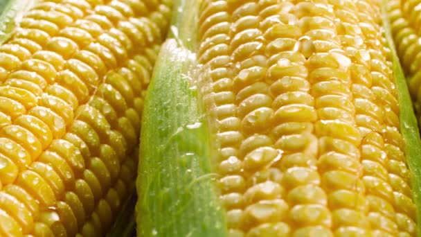 Closeup 4k panning video of big heap of fresh raw sweet corn in wet leaves. Concept of healthy nutrition and organic food. Perfect shot for vegetarian or vegan. Farming industry background