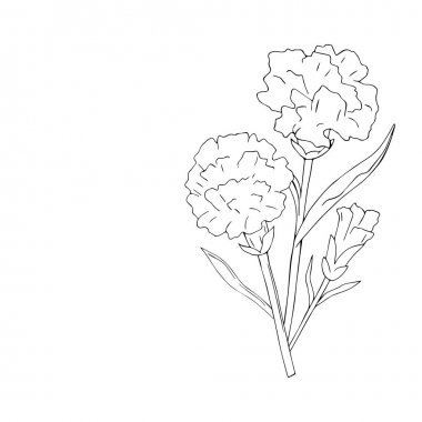 isolate holidays flowers carnation on white background. Vector illustration. May. Victory day. Coloring. Without color.