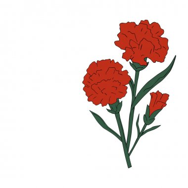 isolate holidays flowers red with green carnation on white background. Vector illustration. May. Victory day.