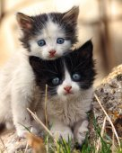Two small scared kittens looking at the camera
