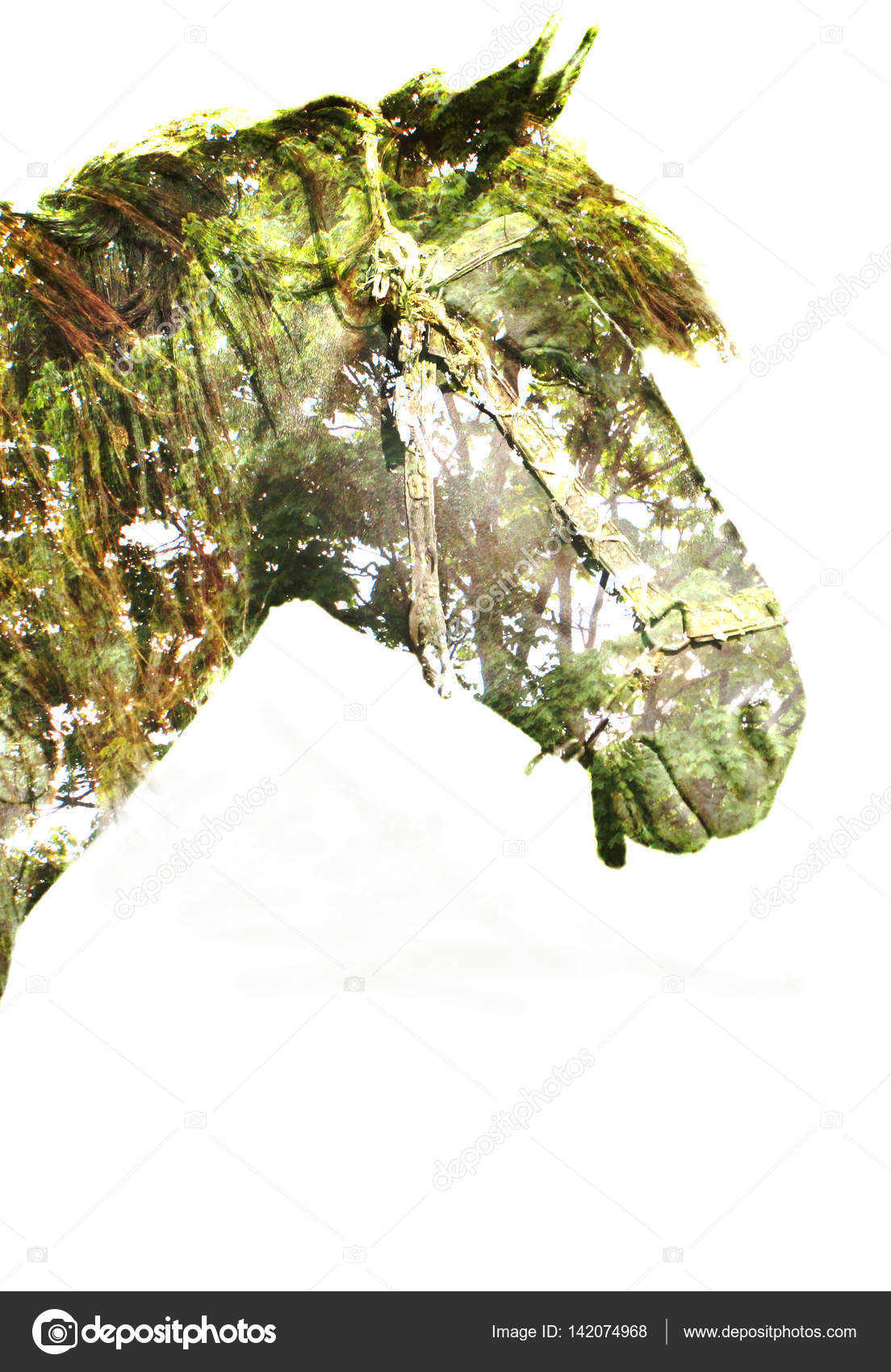 Horse In The Magic Forest Stock Photo C Sir2701 142074968