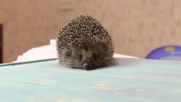Hedgehog on a wooden background in retro style. Dark lighting. Hand in a glove of dark color. Hard shadows. Shallow depth of field.