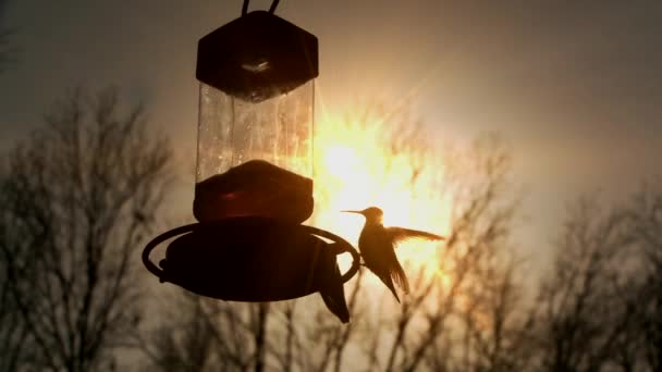 Kolibříci pít při západu slunce
