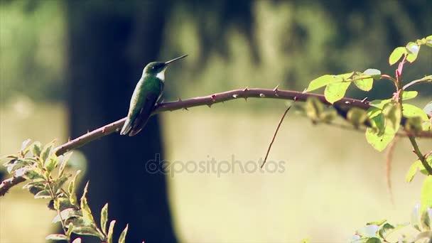 Kolibřík na větev stromu