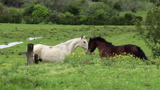 Két szerelmes ló.