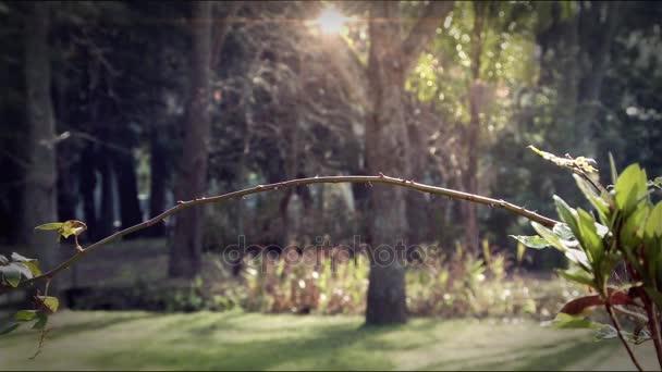 Colibri je posazená na větvi doménové struktury
