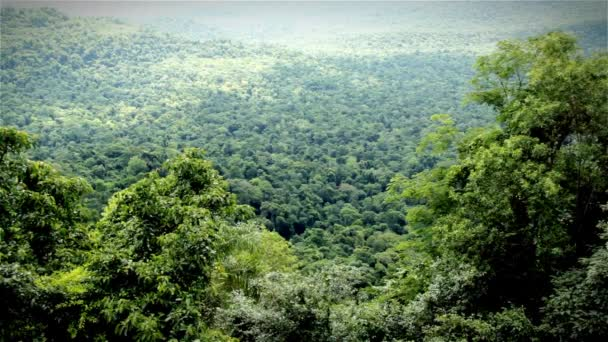 Amazonas-Dschungel