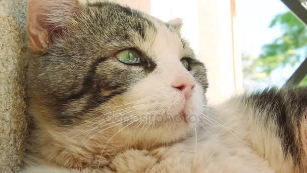 oholené kočky klipy mladá roztomilá kočička