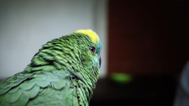 Zvědavý papoušek hledá