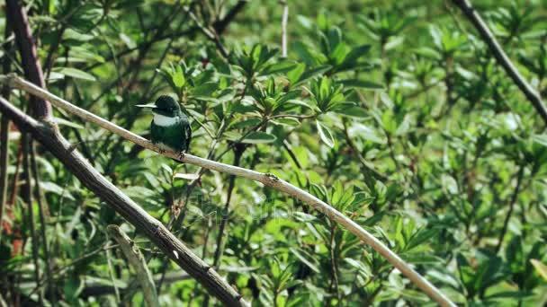 Kolibřík posazený v zeleném lese