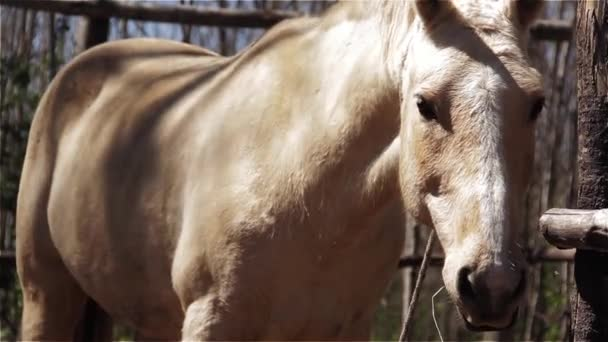Nemes fehér lovat, fű