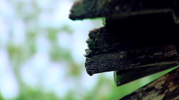 Déšť více než staré dřevěné střechy. Detail