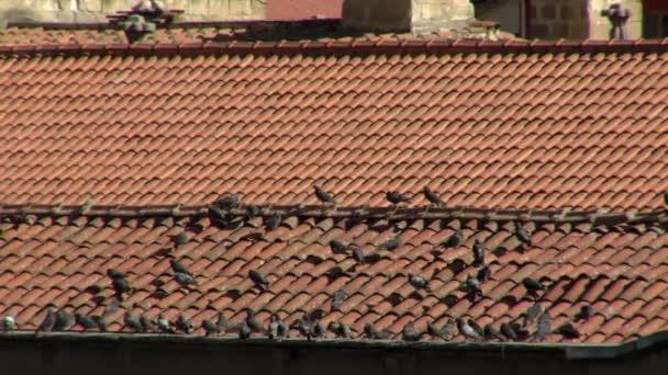 Hejno holubů odpočívajících na dlaždicové střeše.