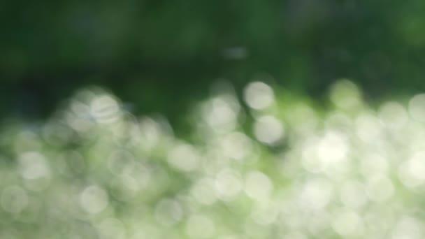 Abstraktní rozmazané pohybující se rozostřené pozadí se světlými jemnými odstíny v bokeh